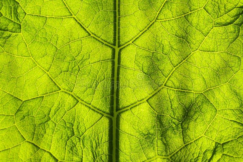 摘要背景绿色叶子特写镜头 项目和设计的图象 绿色纹理叶子 E 免版税库存图片