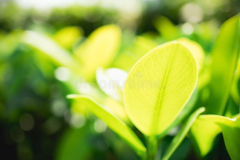 摘要被弄脏的绿色叶子在公园 免版税库存图片