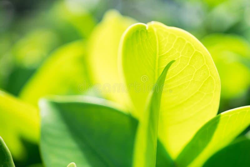 摘要被弄脏的绿色叶子在公园 免版税库存照片