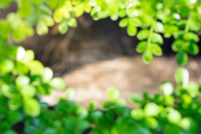 摘要被弄脏的绿色自然框架背景 免版税库存照片
