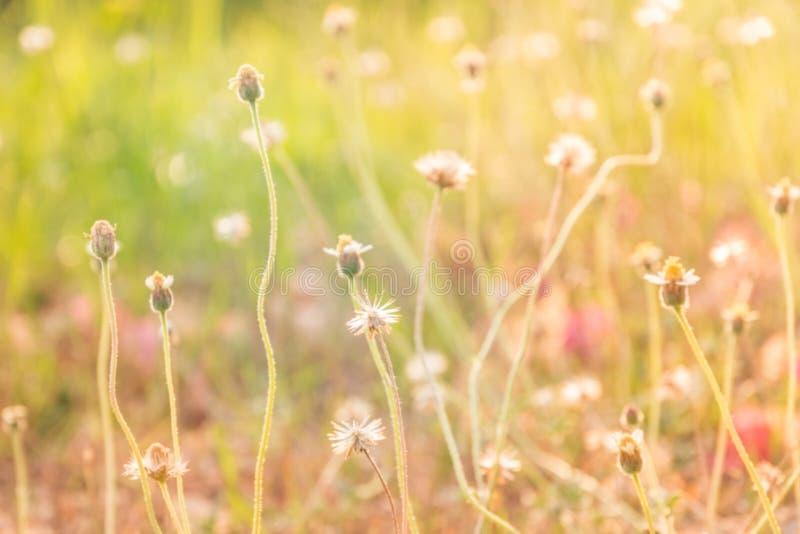 摘要被弄脏花草在放松早晨时间 免版税图库摄影