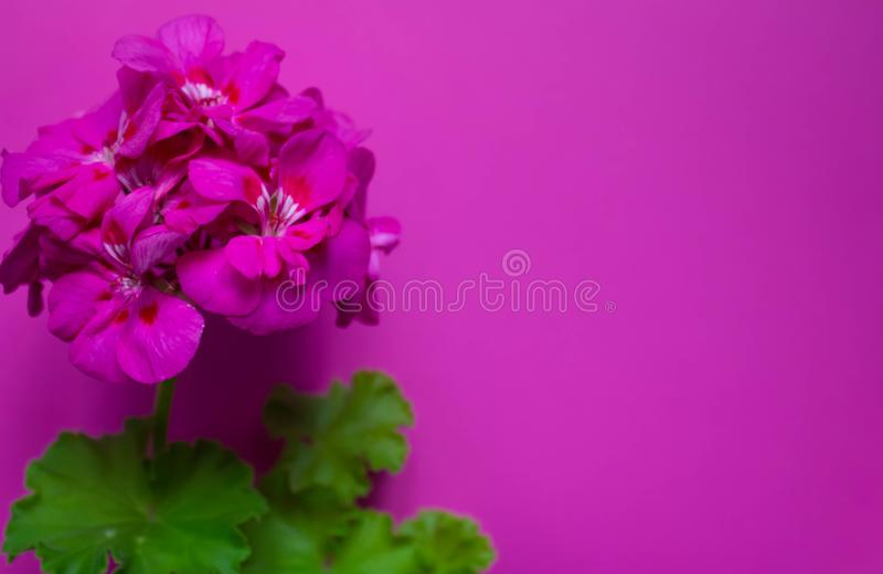 摘要软的花卉背景 紫色花 r 您的设计的明信片模板 图库摄影