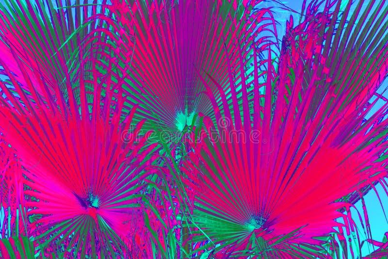 摘要霓虹花卉背景 免版税图库摄影