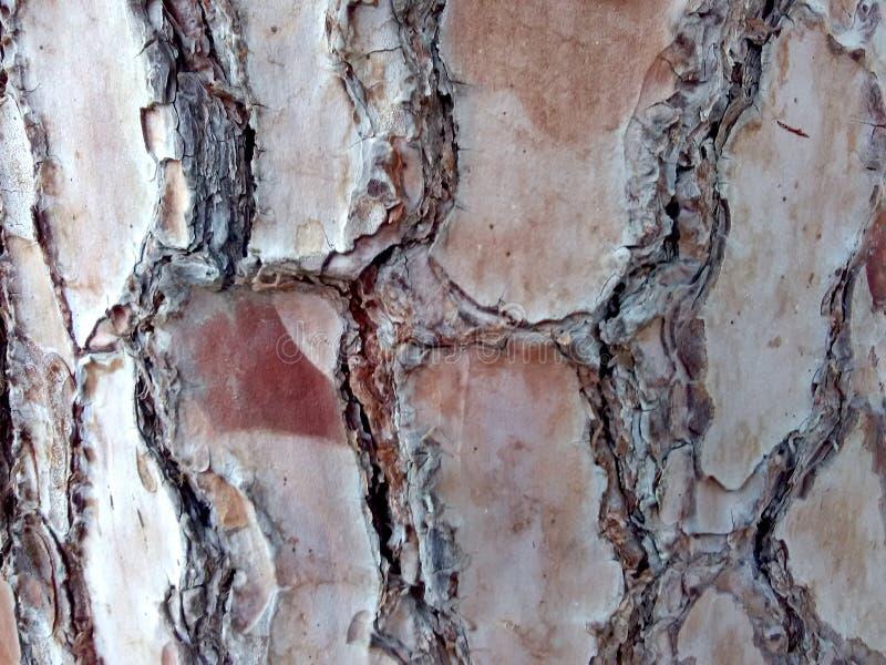 摘要,树的树干 免版税库存图片