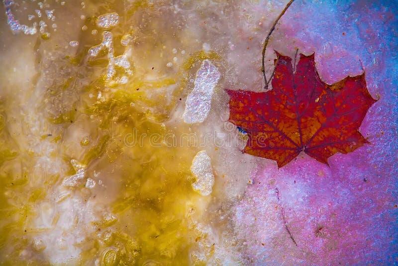 摘要,从在五颜六色结冰的一棵树的叶子 免版税库存照片