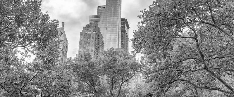 摩天大楼和树在中央公园,纽约 免版税图库摄影