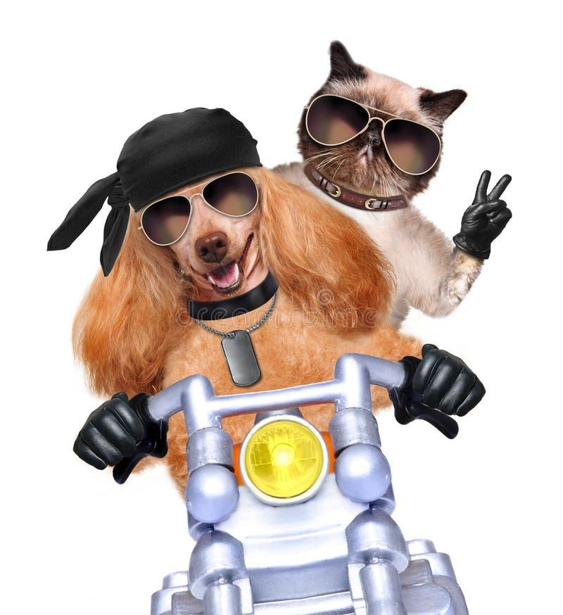 摩托车夫妇以速度 免版税库存照片