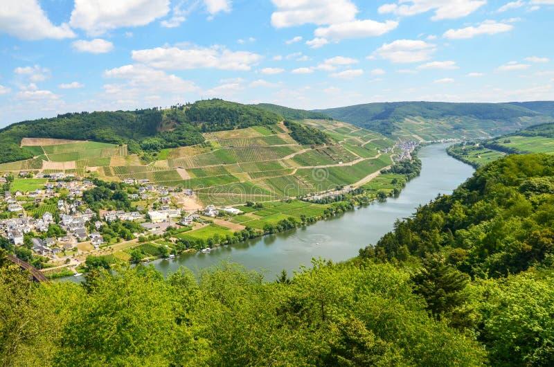 摩泽尔谷德国:看法向在村庄Puenderich和Marienburg附近的河摩泽尔防御- Mosel酒区域,德国 库存图片