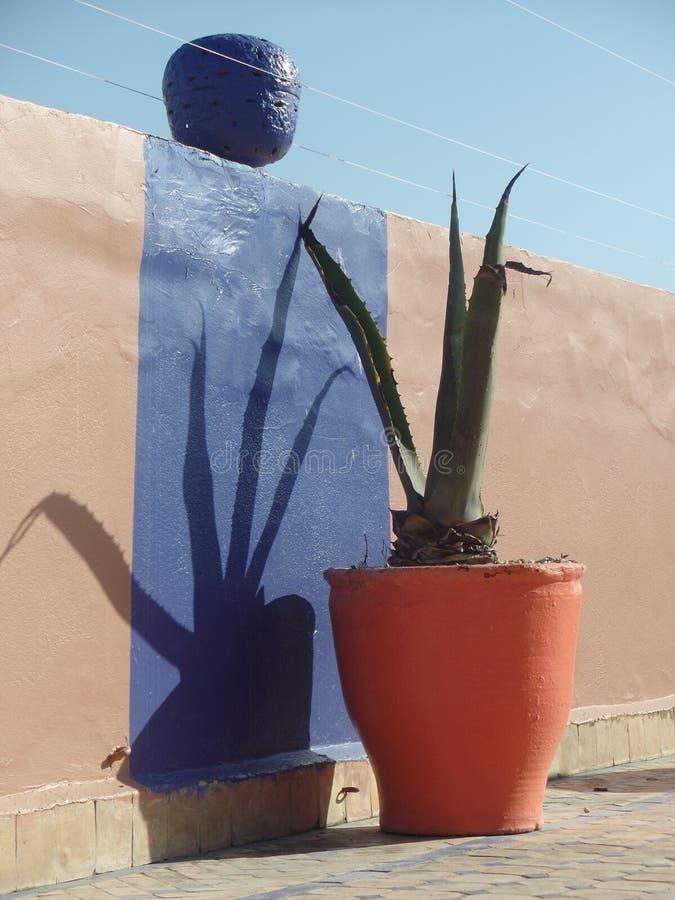 摩洛哥屋顶大阳台的五颜六色的热带植物 免版税库存图片
