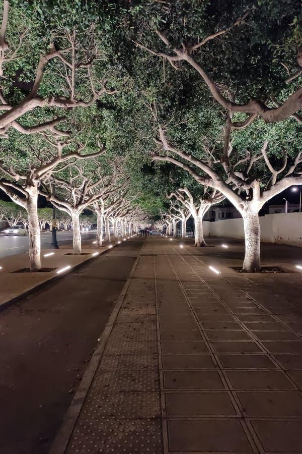 摩洛哥拉巴特的Treeline和空荡荡的街道 免版税库存图片