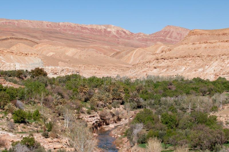 摩洛哥沙漠绿洲 免版税库存照片
