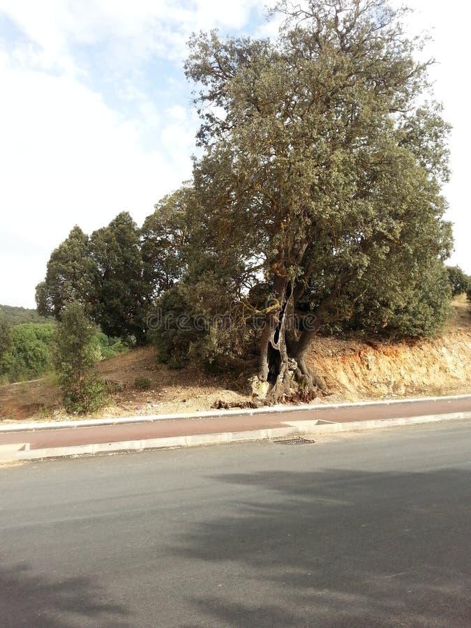 摩洛哥的森林 免版税库存图片
