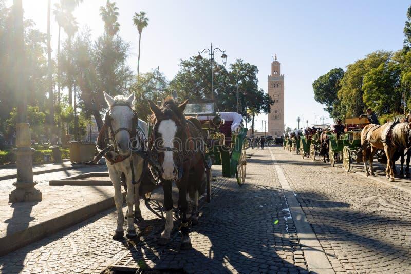 摩洛哥马拉喀什清真寺前的马车等待游客 库存图片