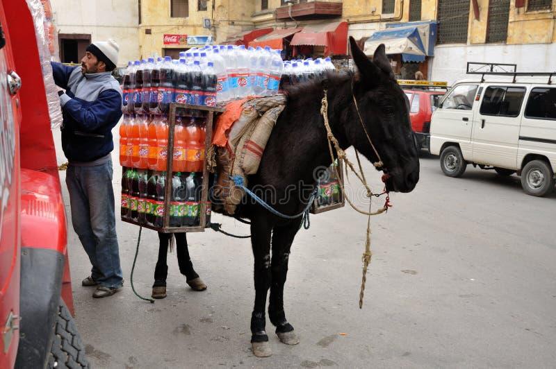 摩洛哥骡子运输 库存图片