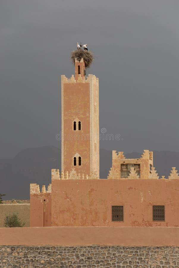 摩洛哥鹳 免版税库存图片