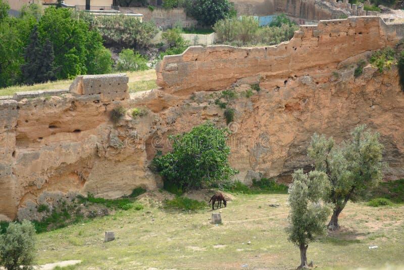 摩洛哥城市墙壁-菲斯 库存照片