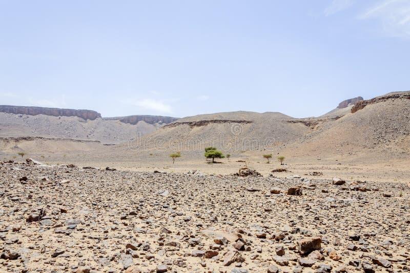 摩洛哥, Draa谷、石沙漠和金合欢树 免版税库存图片