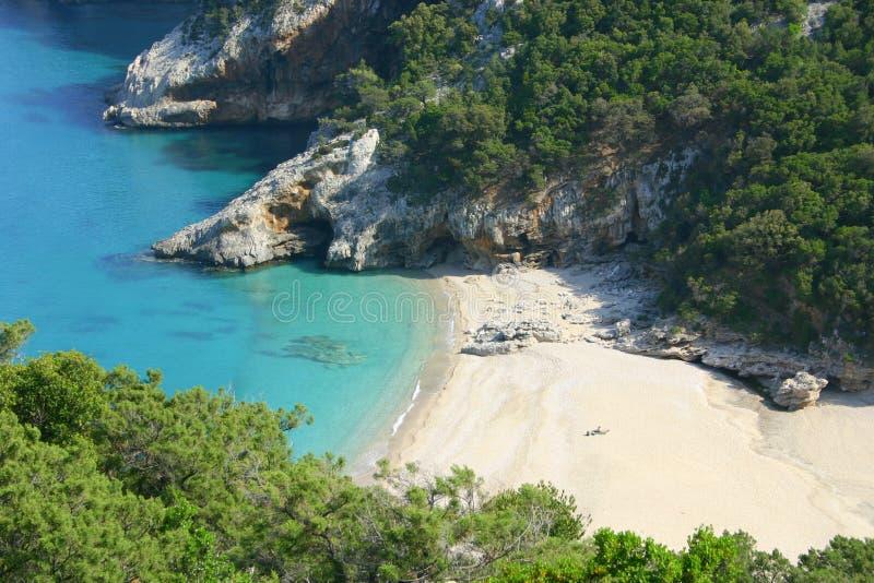 撒丁岛野生生物 免版税库存图片