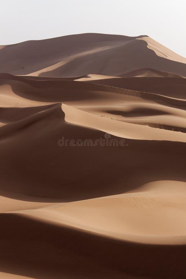 撒哈拉大沙漠舱内甲板在日落的摩洛哥 免版税库存图片