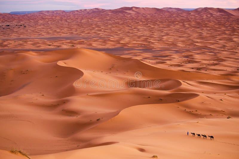 撒哈拉大沙漠 免版税库存照片