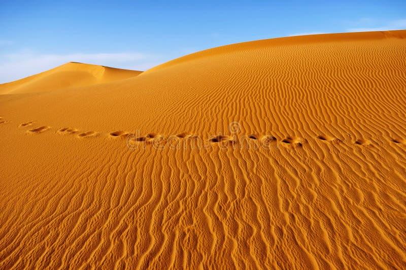 撒哈拉大沙漠 免版税库存图片