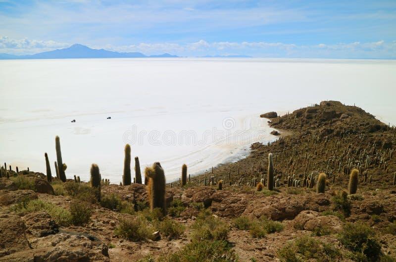 撒拉族de Uyuni,从Isla印加瓦西峰,在盐舱内甲板中间的仙人掌领域海岛的世界` s最大的盐舱内甲板视图 库存图片