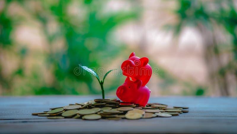 播种在硬币-成长的投资想法 免版税库存照片