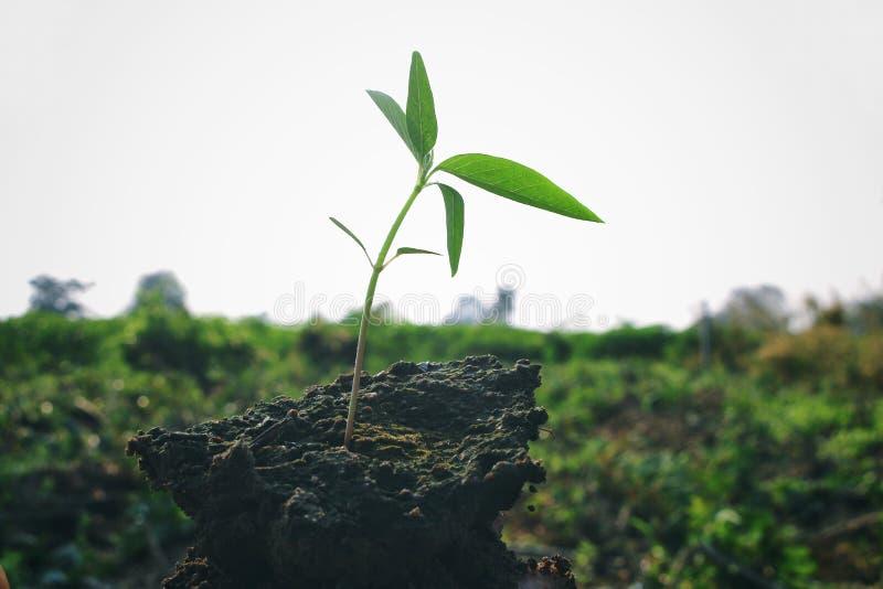 播种树与英俊的地球日在农田里 免版税库存照片