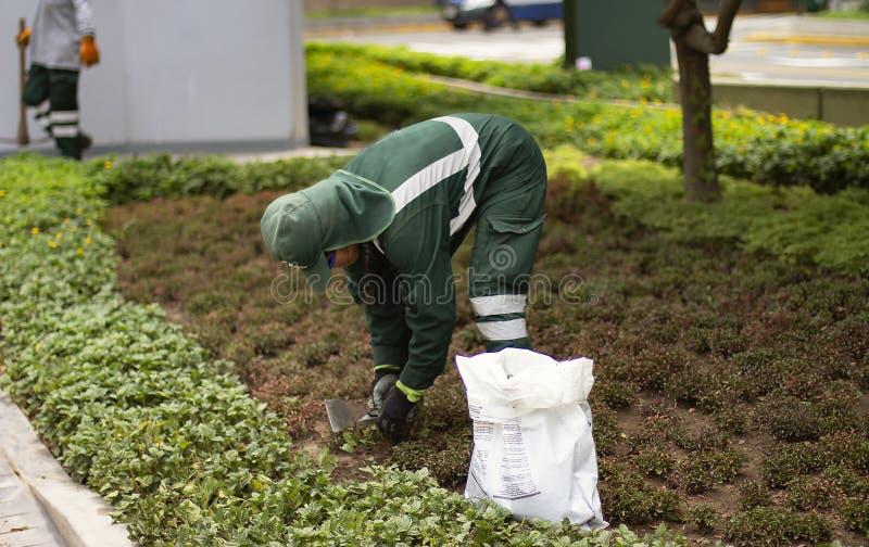 播种植物和种植种子的自治市的公共工作者花匠 库存图片