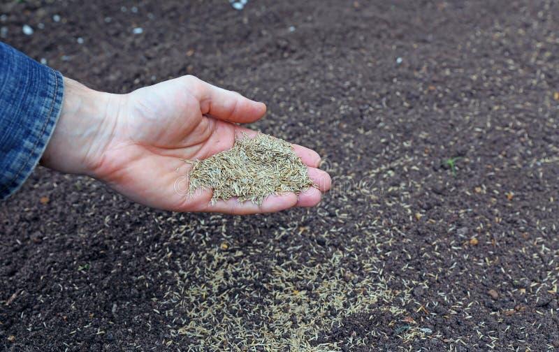 播种草种子到土壤里 免版税库存照片