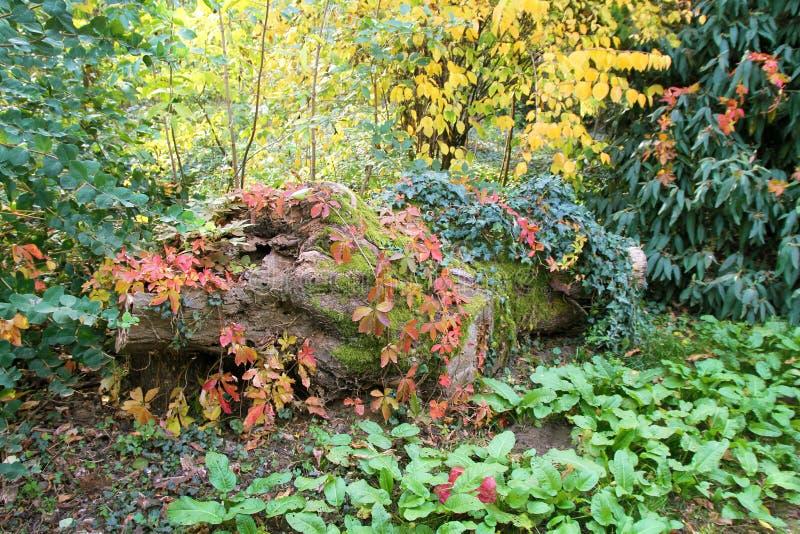 攀登侵略的树干植物在植物园Macea,阿拉德县-罗马尼亚 库存照片