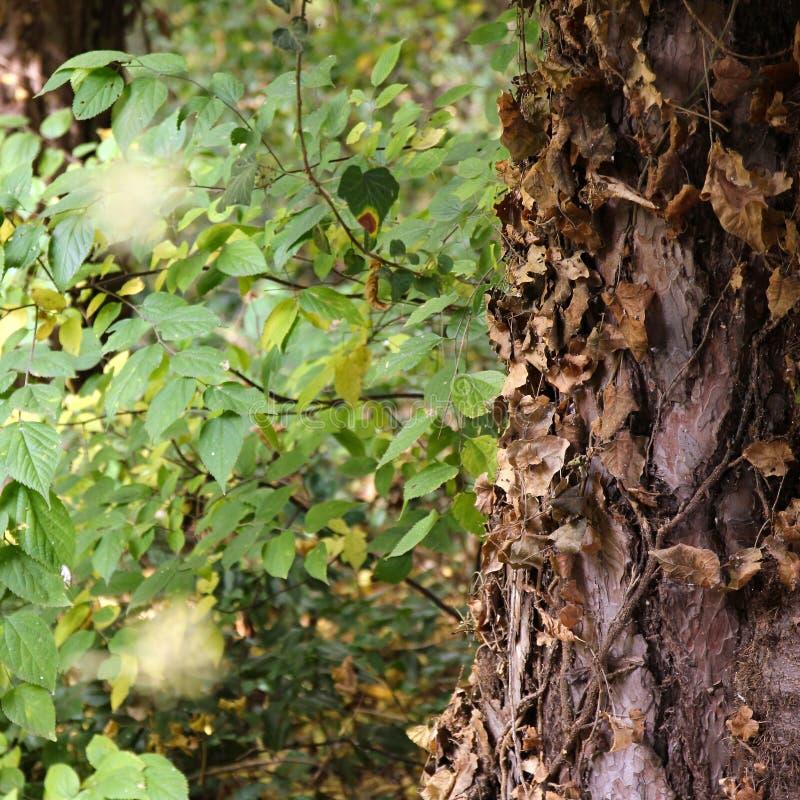攀登侵略的树干植物在植物园Macea,阿拉德县-罗马尼亚 免版税库存图片