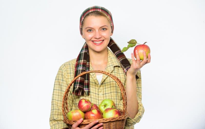 收割期概念 妇女快乐的村民运载篮子用自然果子 夫人农夫花匠感到骄傲为她 库存照片