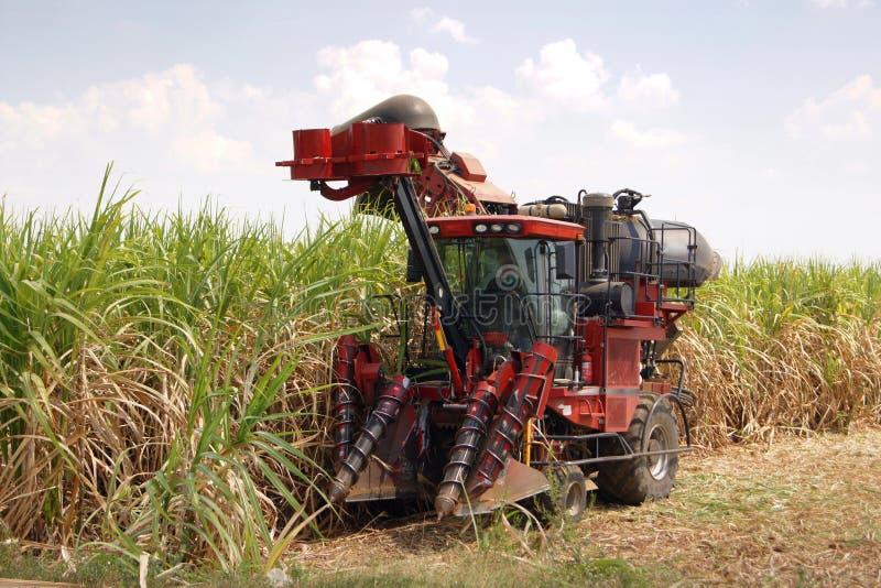 收割机切口在领域的甘蔗和农业在蓝天下 免版税库存图片
