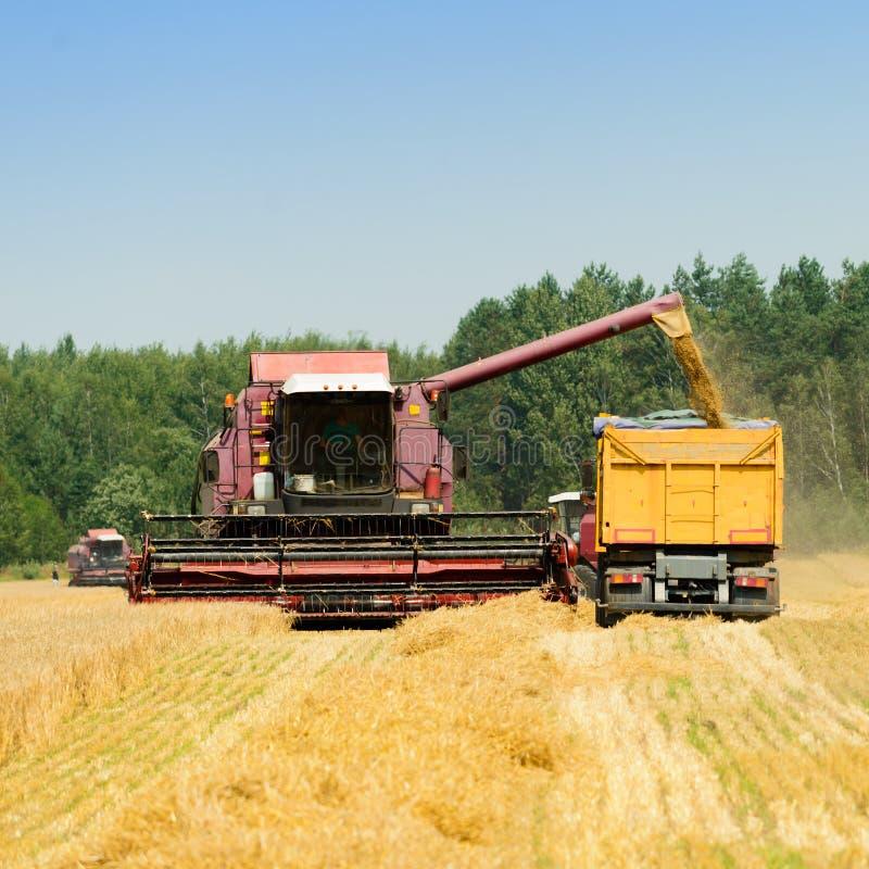 收割机联合收获麦子和倾吐它入拖拉机t 免版税库存图片