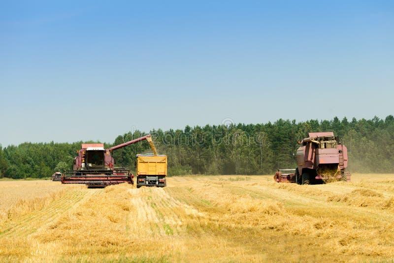收割机联合收获麦子和倾吐它入拖拉机t 免版税库存照片