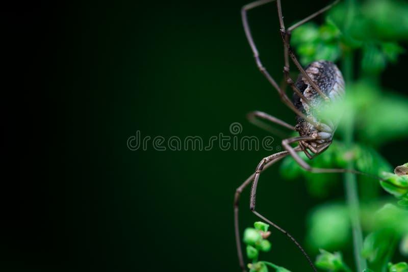 收割者沿植物的词根的蜘蛛皮 免版税图库摄影