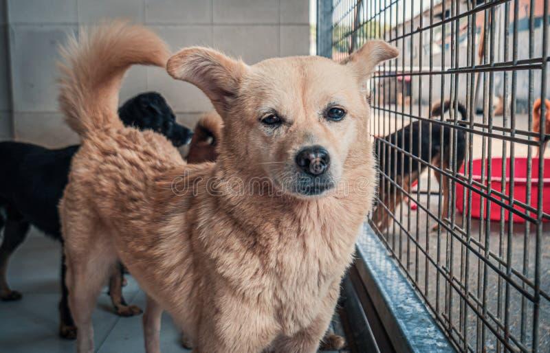 收容所里的悲伤的狗等待被救,被收养到新家 动物庇护所概念 免版税库存照片