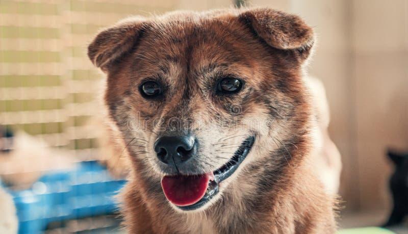 收容所里的悲伤的狗等待被救,被收养到新家 动物庇护所概念 库存图片