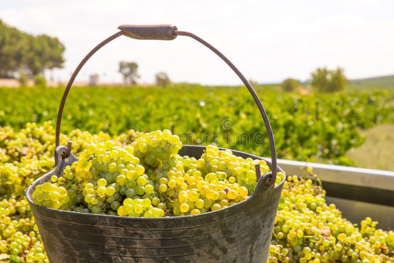收获与葡萄酒收获的夏得乃白酒 库存照片