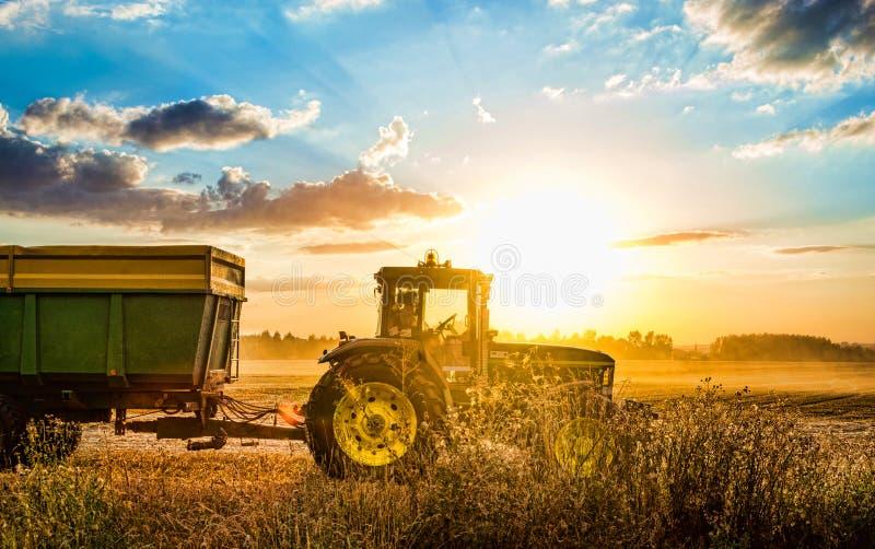 收获五谷的拖拉机在夏天在捷克共和国的日落期间 库存照片