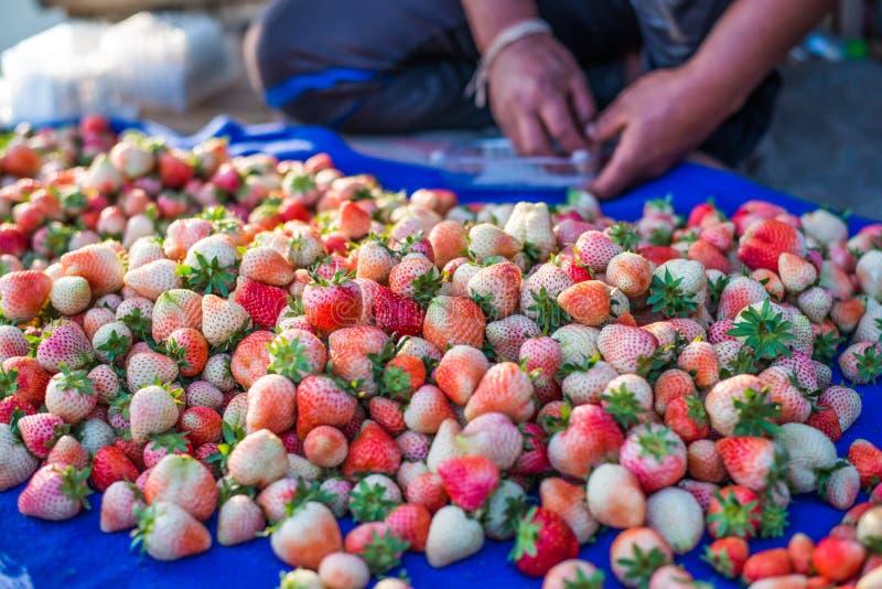 收获包装在领域的草莓蓝莓 免版税库存图片