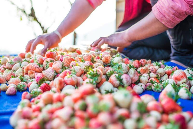 收获包装草莓蓝莓 库存照片