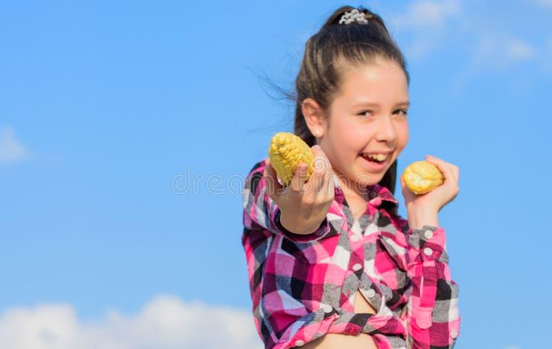 收获和乐趣 孩子爱玉米食物 玉米素食主义者和健康有机产品 素食营养概念 孩子 库存照片