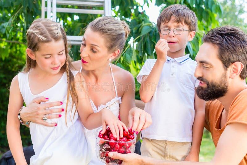 Download 收获和吃樱桃的家庭在庭院里 库存图片. 图片 包括有 村庄, 父亲, 系列, 女孩, 男朋友, 樱桃, 夏天 - 59102611