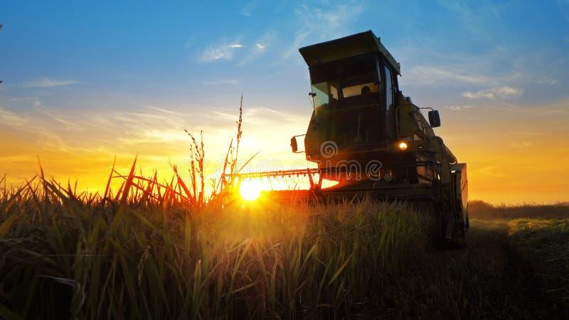 收获在米领域的组合农夫 免版税库存照片