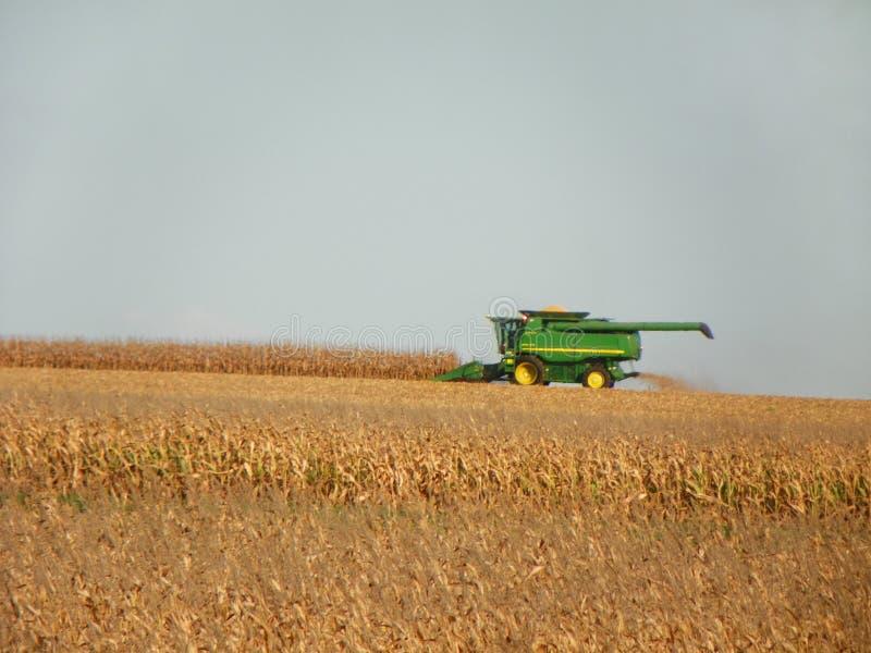 收获在领域的组合拖拉机成熟玉米 免版税库存照片