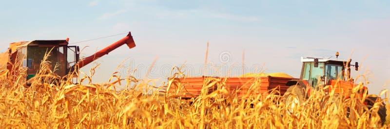 收获在领域的组合操作员玉米在晴天 免版税库存图片