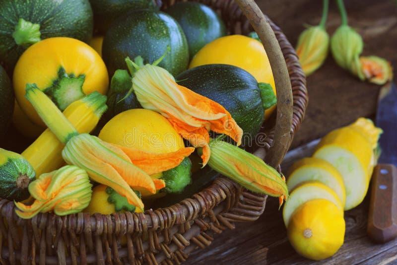 收获夏南瓜 在篮子的新鲜的南瓜 新鲜的南瓜从庭院采摘了 E 库存照片