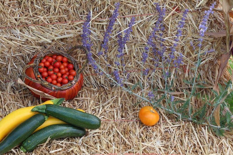 收获套夏南瓜、蕃茄和淡紫色 免版税图库摄影
